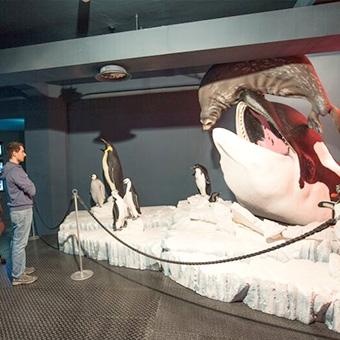 aquarium of genoa - Acquario Di Genova Orari Biglietteria