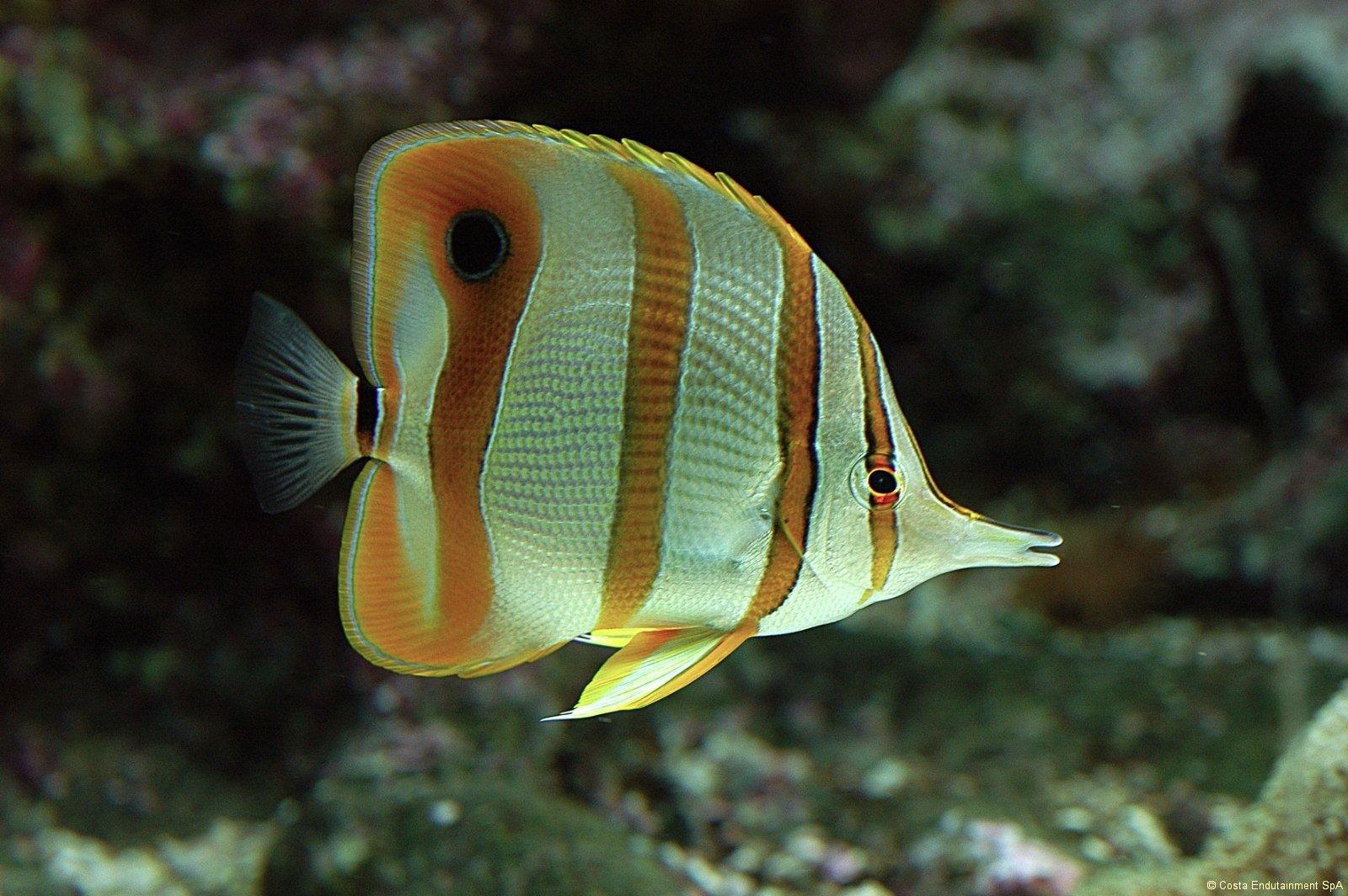 Acquario di genova for Pesci tropicali acquario