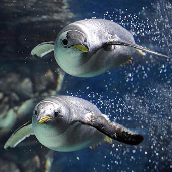 Benvenuti acquario di genova for Blu di metilene acquario